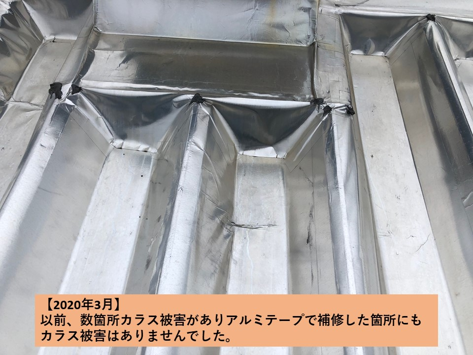スカイ工法でトップライトも遮熱!<br>施工後のカラス被害状況報告