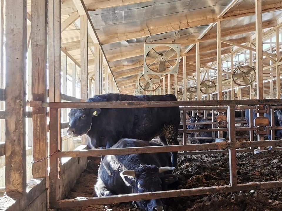 牛舎で採用。牛も快適に!!